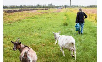 NRC bericht over de polder